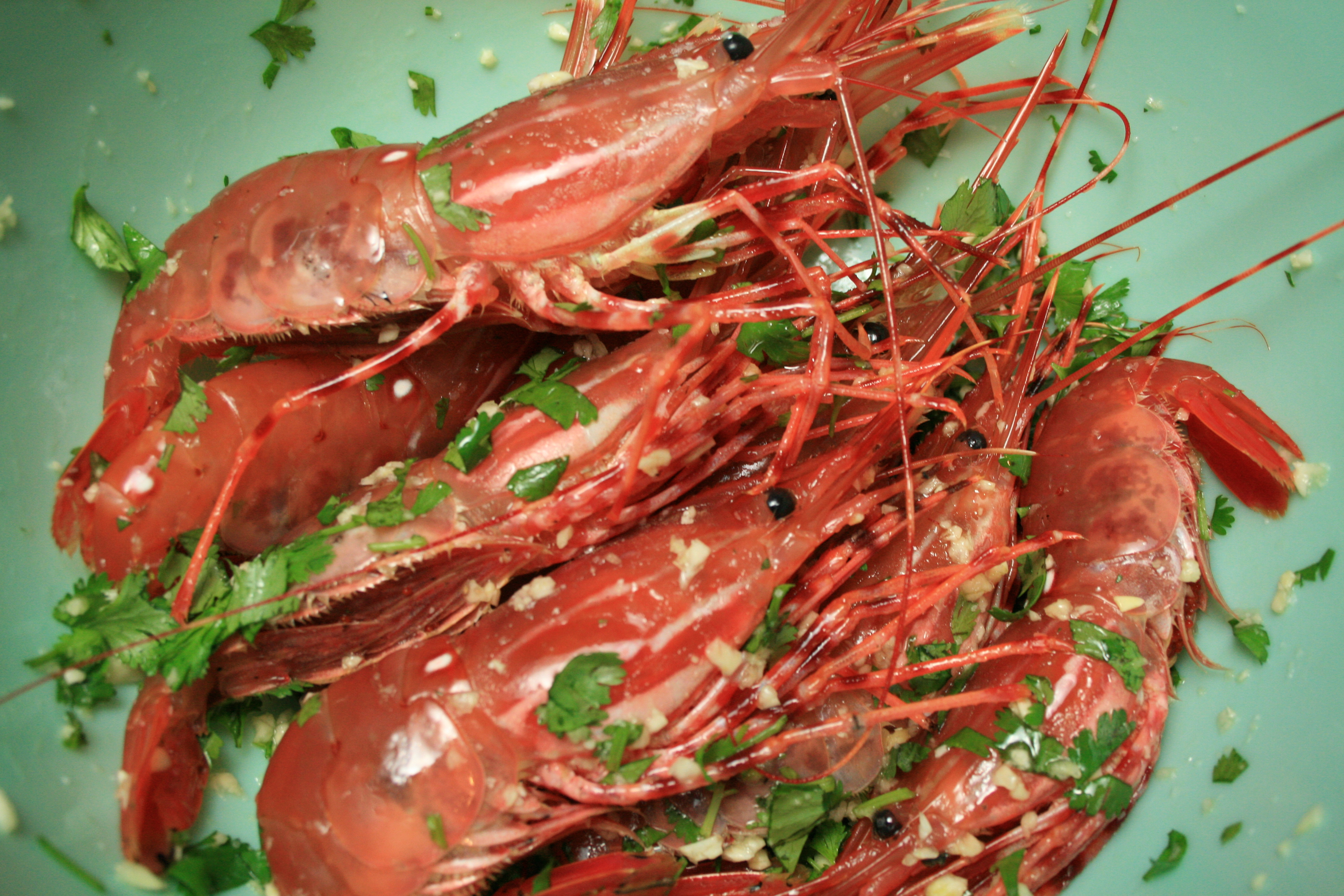 Spot prawns coated with chopped cilantro, olive oil, garlic and salt.