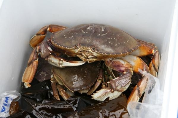 Crab 2